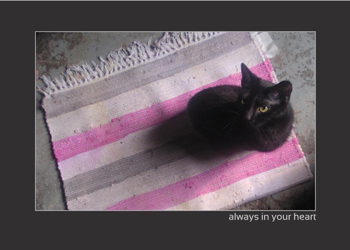 animal sympathy card