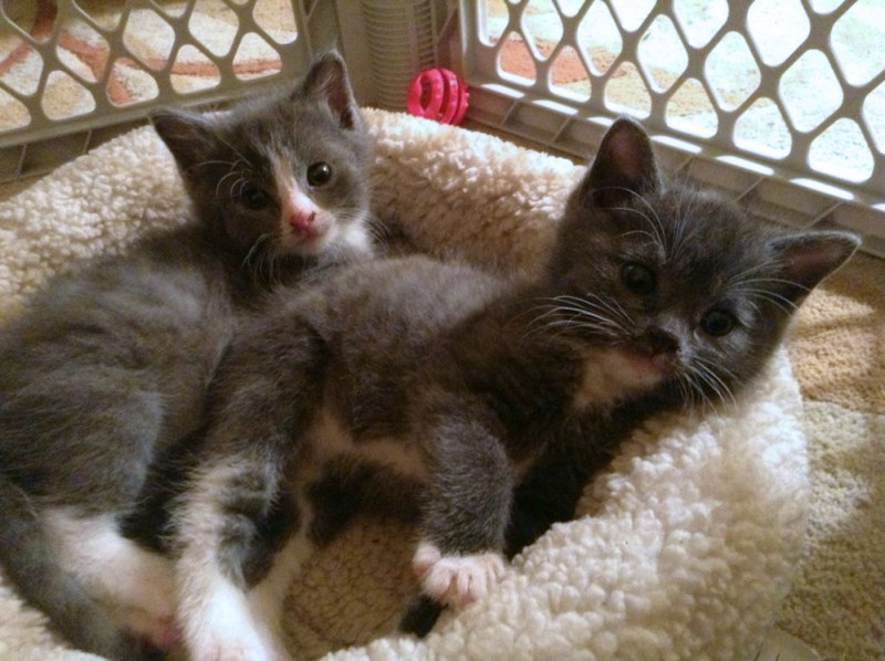 Two little rescued sweeties will be looking for a home.