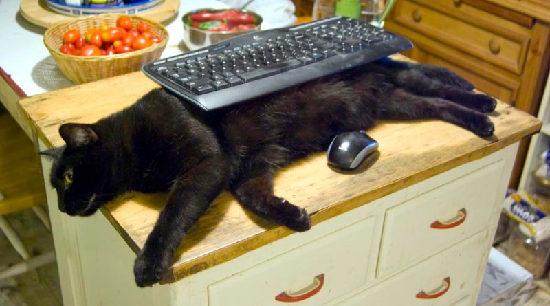 black cat with keyboard
