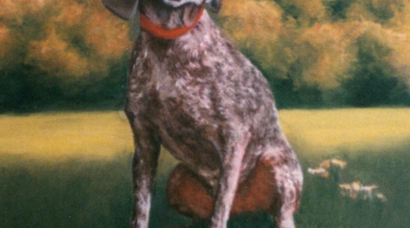 pastel portrait of german short-haired pointer dog