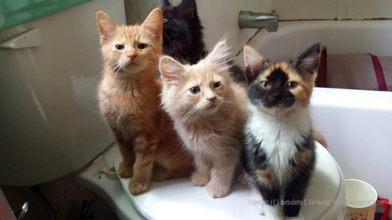 Crayola, Samwise and Splash are ready for action! Or second breakfast! Higgins has other plans. Crayola is still up for adoption!