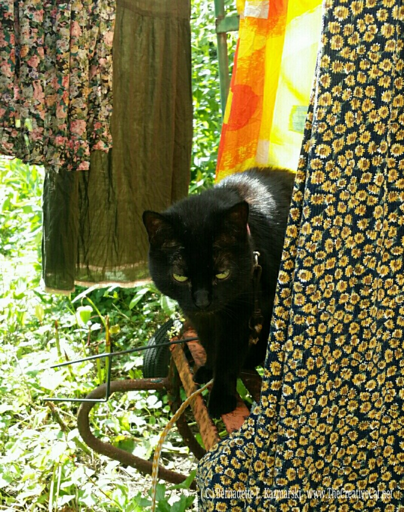 Mimi enjoys cool shade between my dresses hanging on the line.