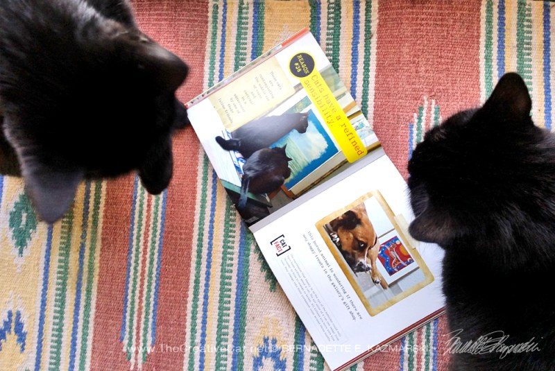 two black cats with book
