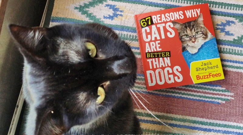 """black cat with """"67 reasons why cats are better than dogs"""" by Jack Shepherd"""