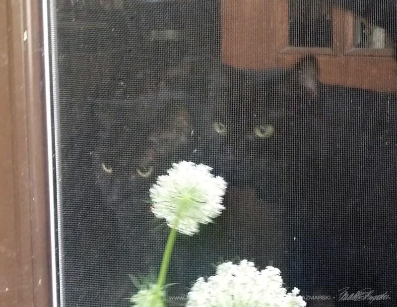 Mimi and Mr. Sunshine study my flowers.