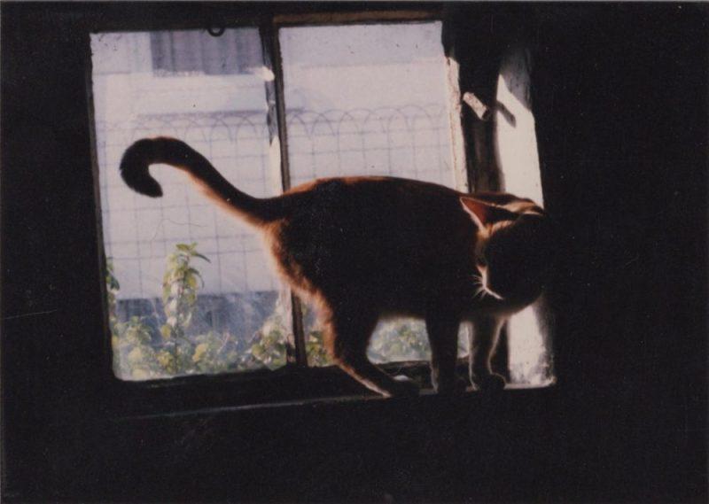 Photo of Allegro, reference for Suncatcher