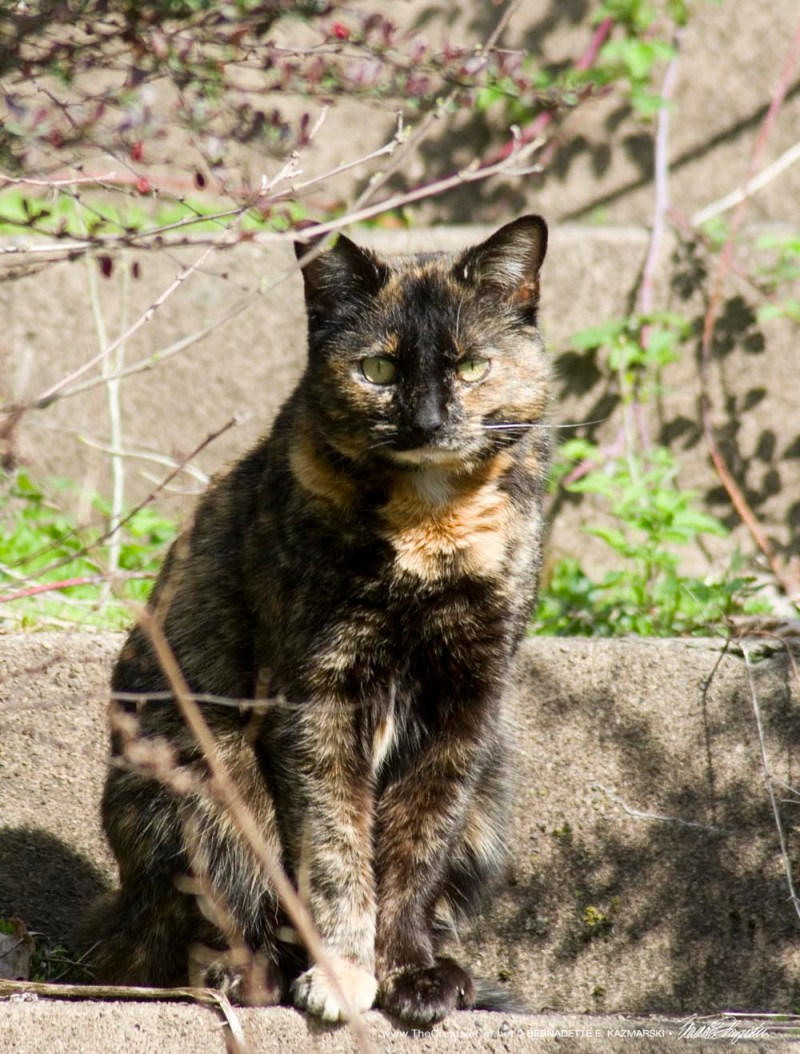 tortoiseshell cat at abandoned house