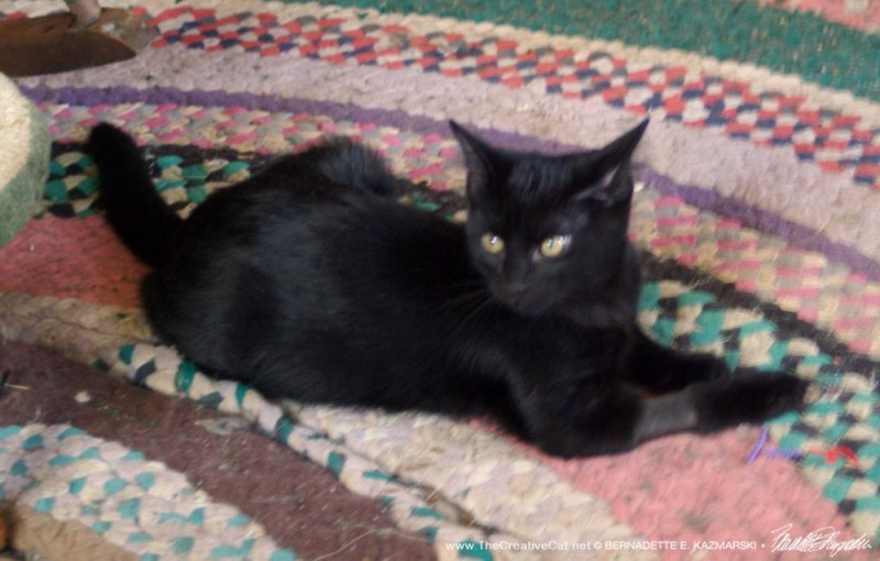 black kitten on rug