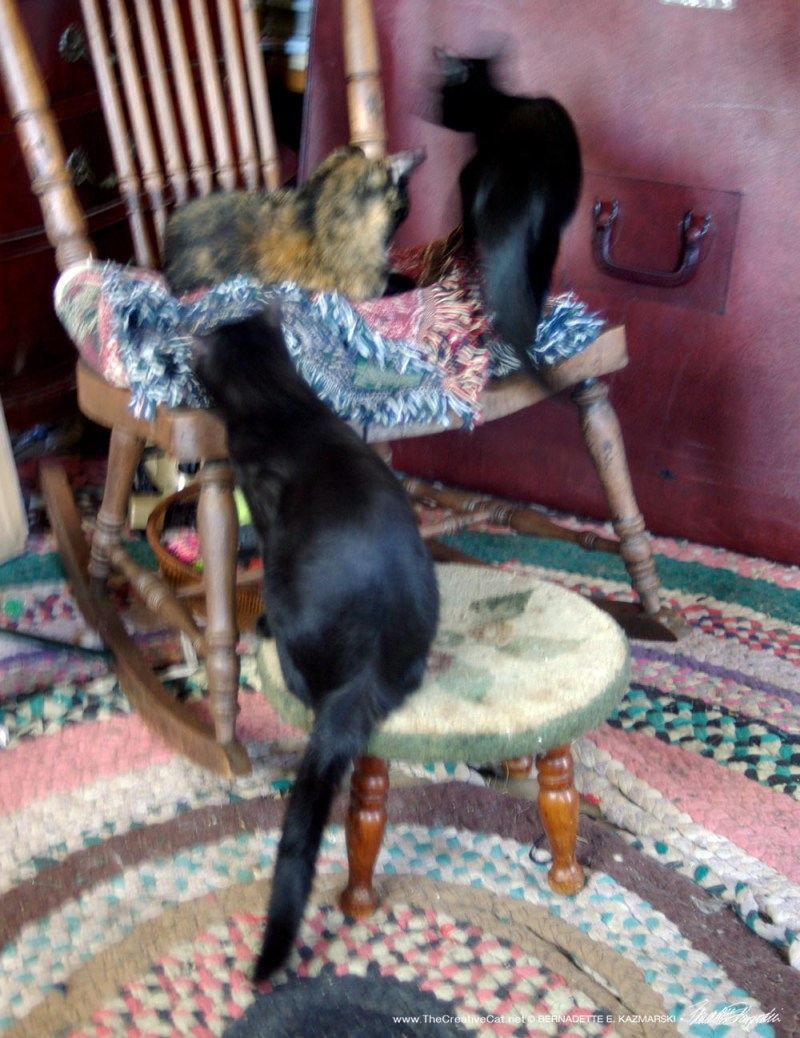 cats on rocker