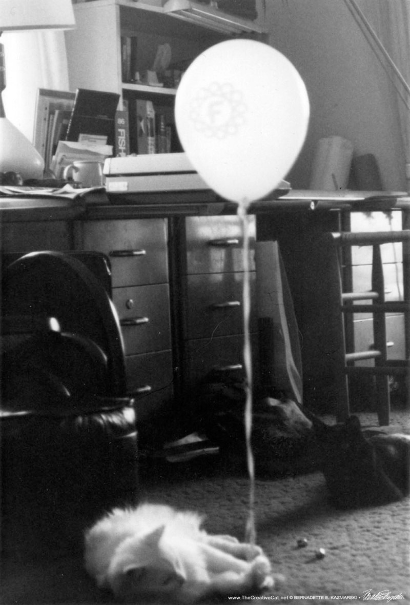 two cats and balloon in black and white