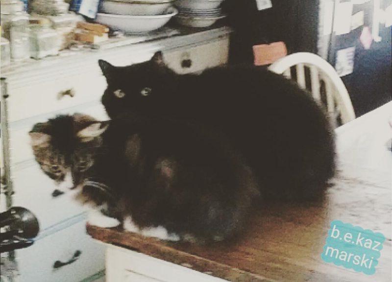 Basil and Mariposa