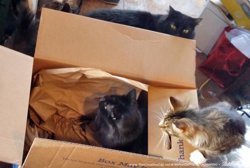 Basil, Mariposa and Hamlet play with the box.