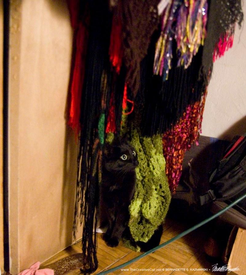 black cat in scarves