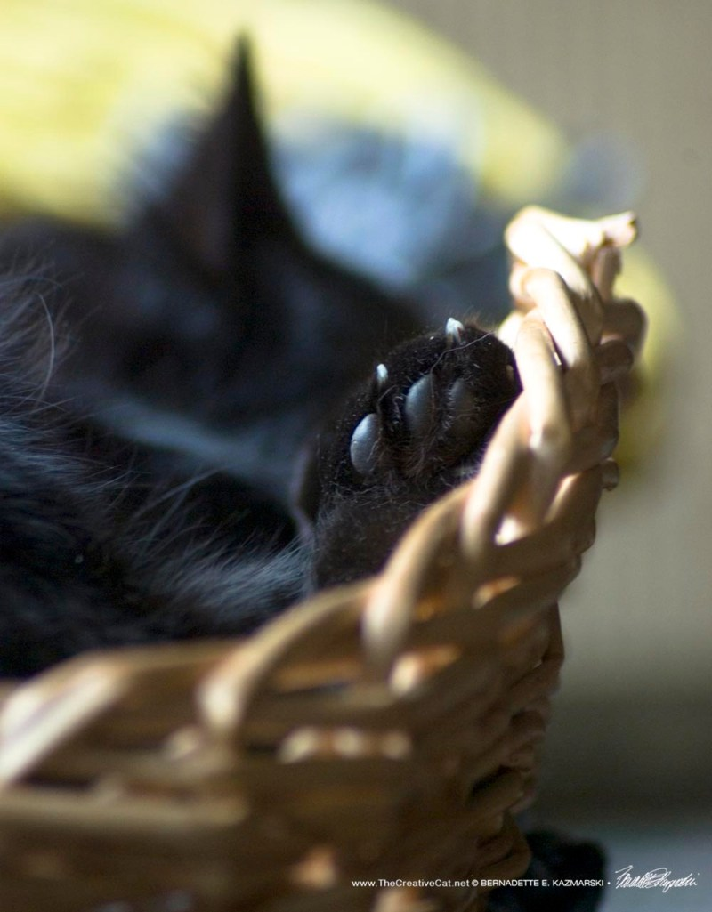 black cat sleeping in basket