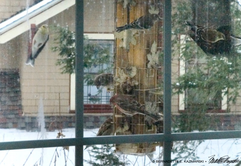 Birds at the feeder.