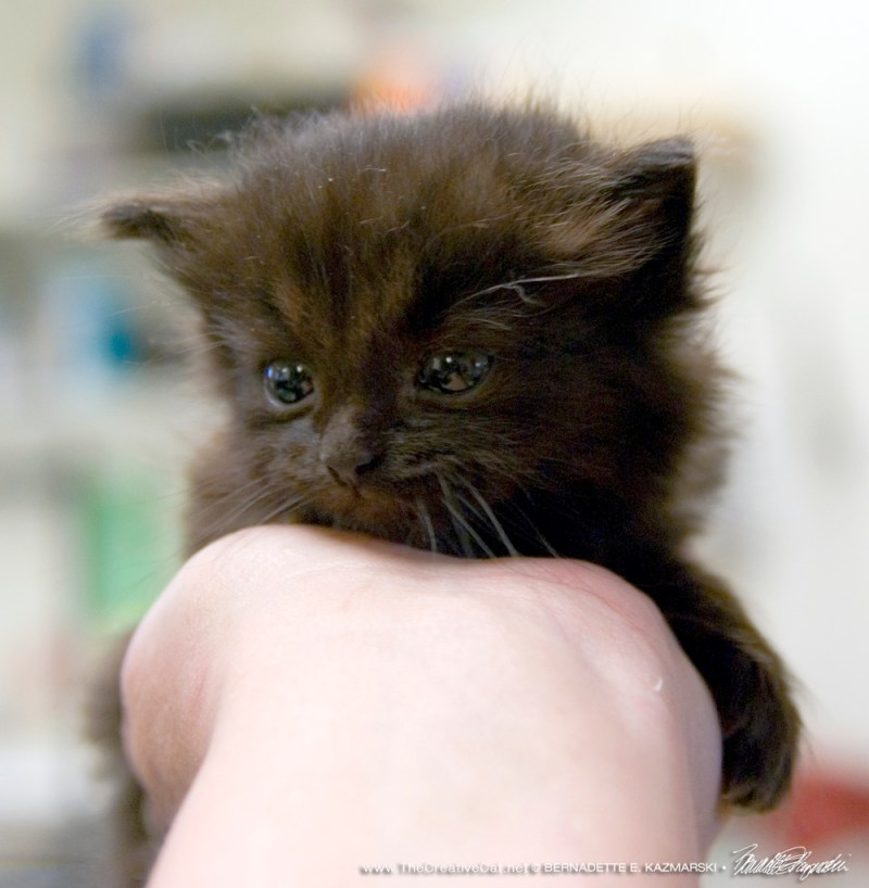This was the only kitten in the rescue.