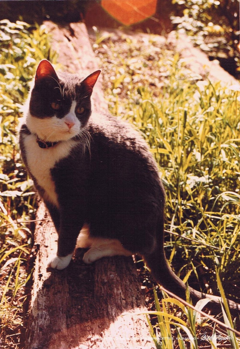 My first cat, Bootsie