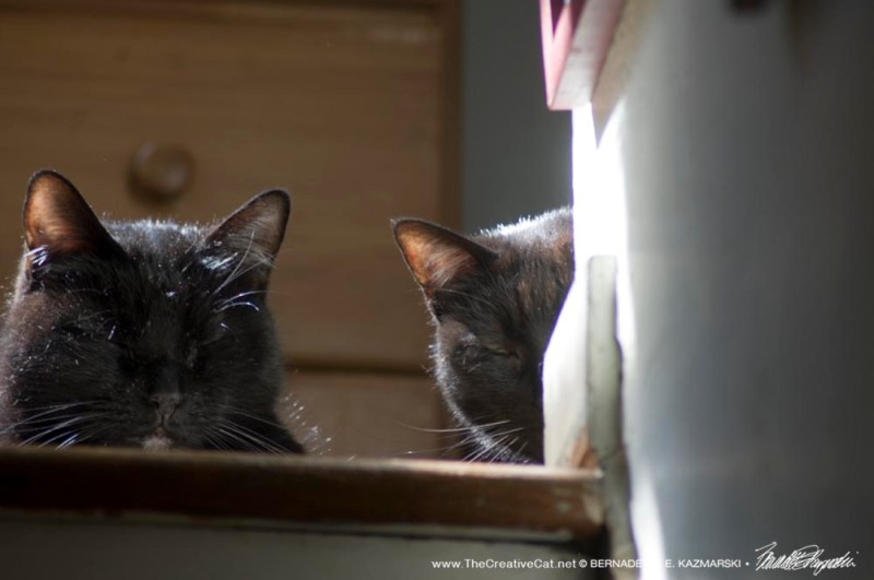two black cats at top of stairs