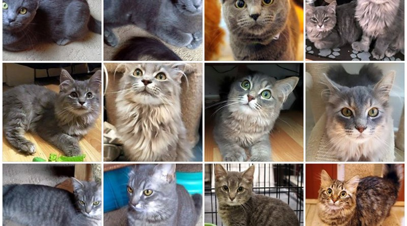 The Brookline Kitties are looking for forever homes!