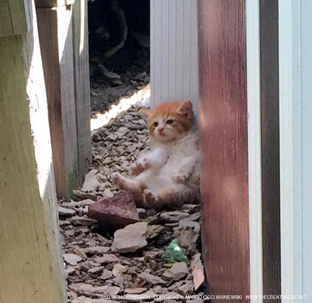 Three Little Kittens, With Cerebellar Hypoplasia