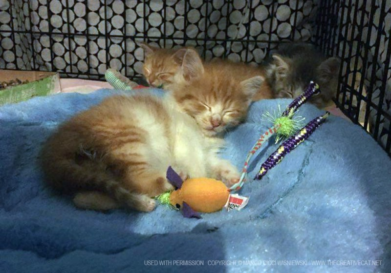 Peter Pan sleeping on his bed with Rufio and Wendy Darling behind him.