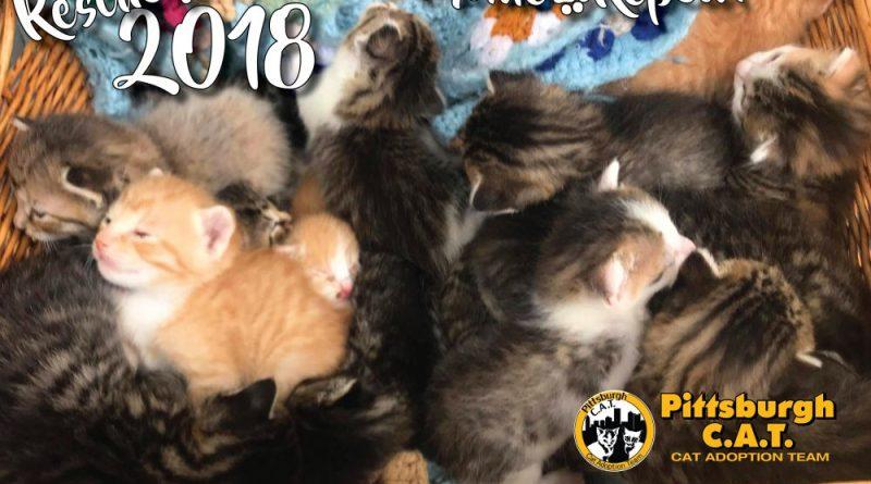 Pittsburgh CAT Calendar cover.