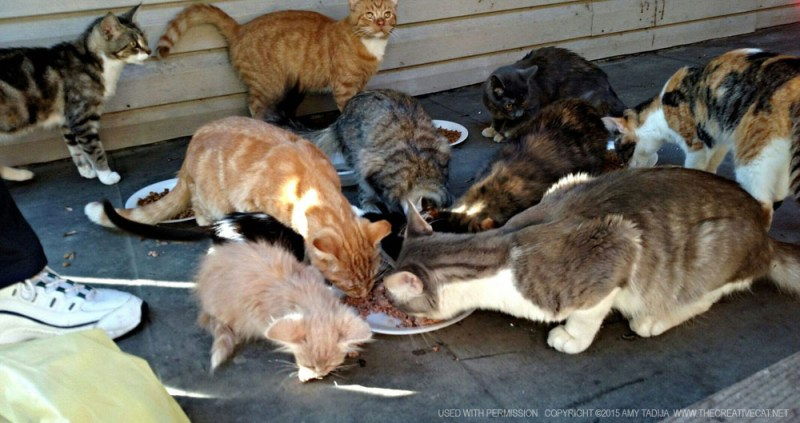 A bunch of the cats eating.