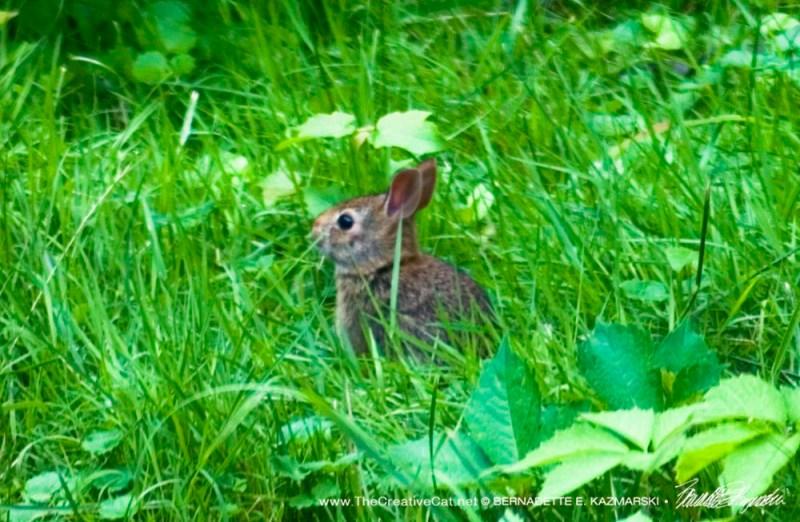 The little chocolate bunny.
