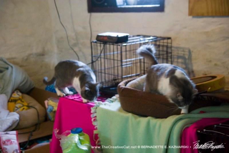 Cletus and Cuddlebug exploring.