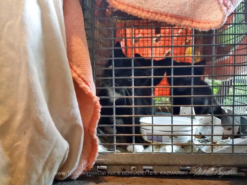 Four hissy kittens!