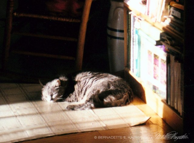 cat sleeping in sun
