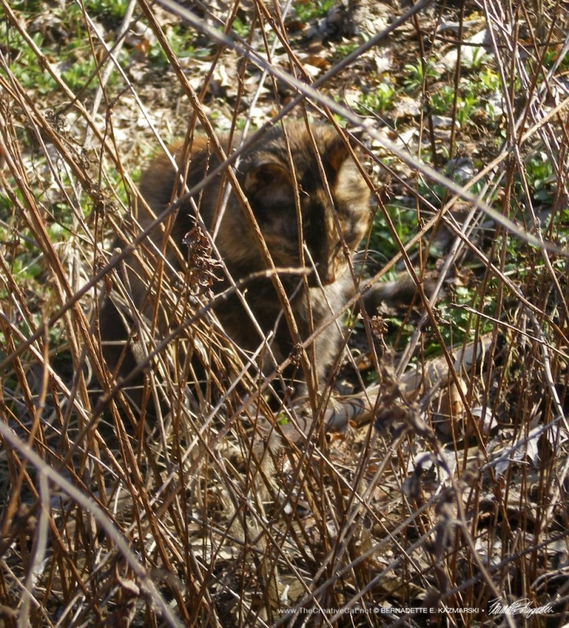 Cookie hiding behind some sticks.