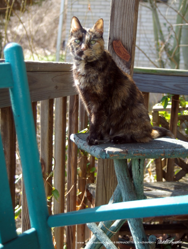 Cookie waits on her observation table.