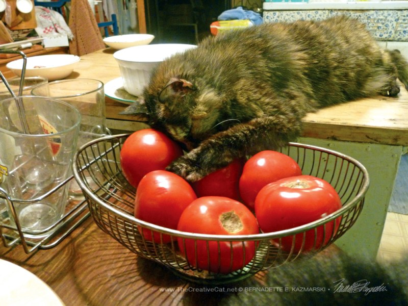 June-Tomato for Your Pillow
