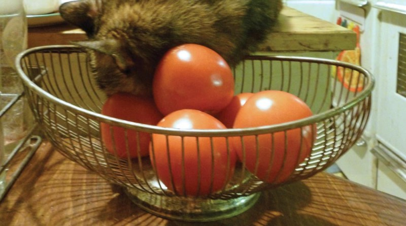 A tomato for your pillow.