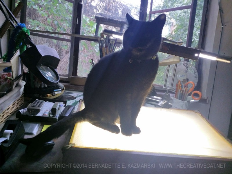 black cat on light table