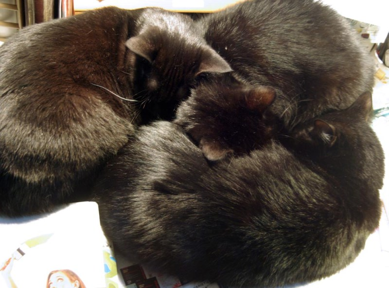 photo of three black cats curled together