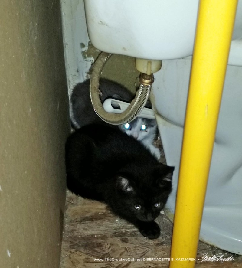 The black and the gray and white kittens hiding behind the toilet.