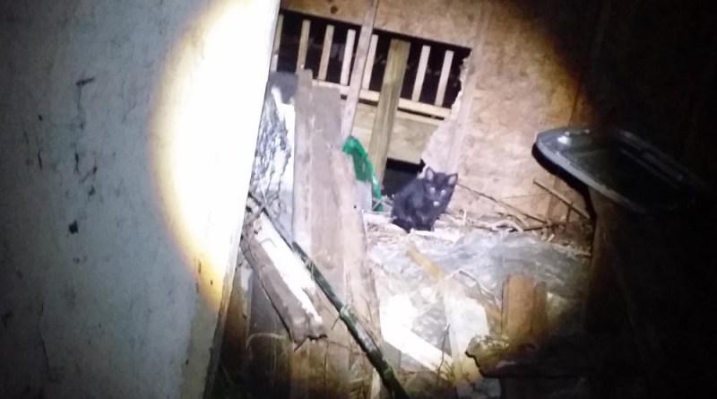 The black kitten in the spotlight.