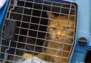 Rescue Story: Emery is On His Way!