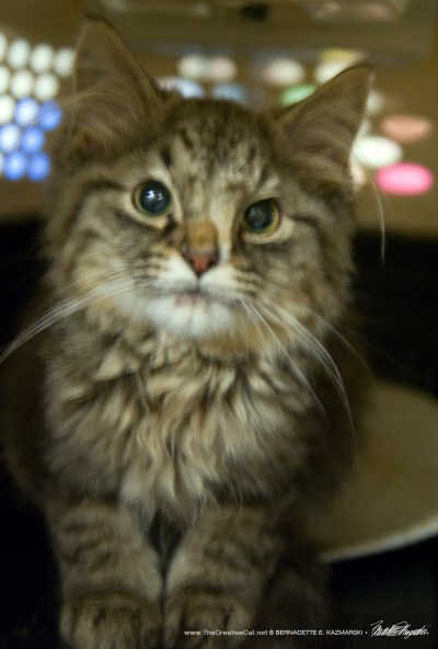 A kitten's distored face.