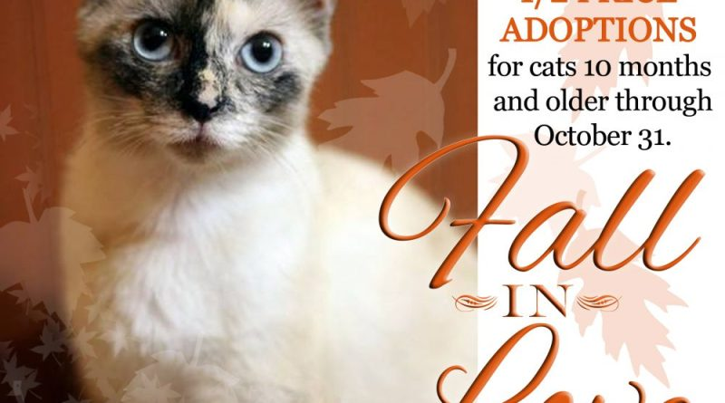 Fall in love--with an adult cat!