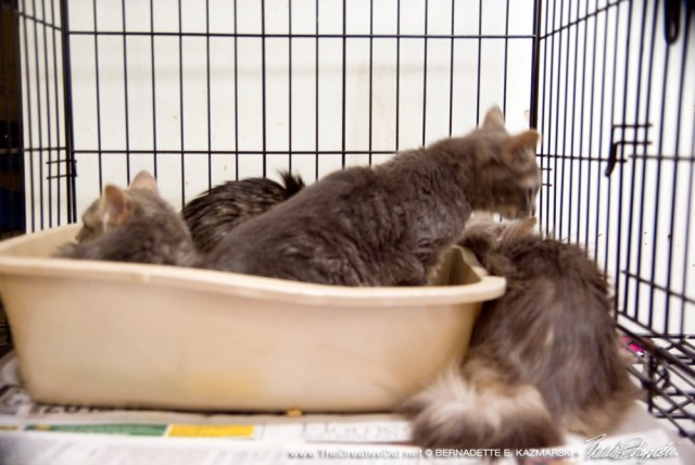 Five kittens are pretty scared at first.