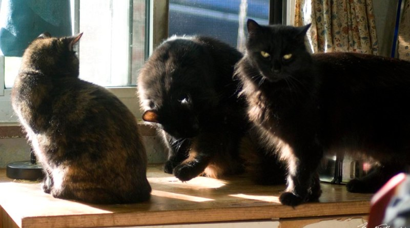 three cats in the sun
