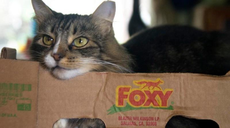 Daily Photo: Foxy Mariposa