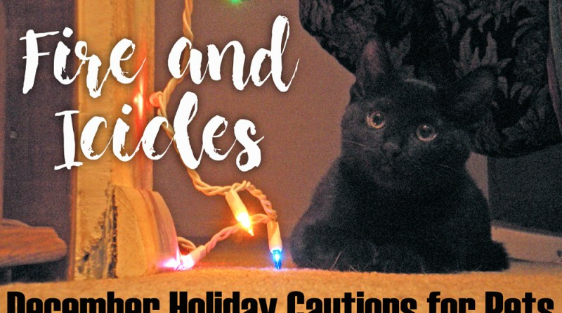 Fire and Ice-icles, December Holiday Cautions for Pets