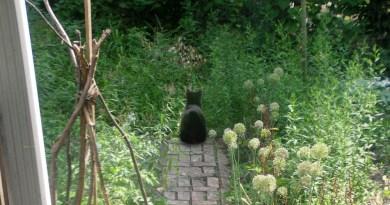 Garden With Maia