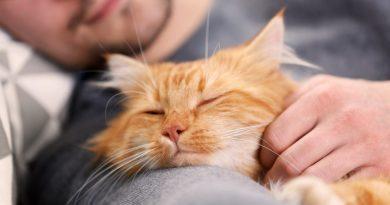 GetYourPet.com: Rehome a Pet, Adopt a Pet, Home to Home