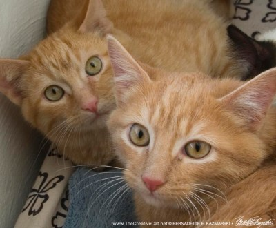 Gingers!