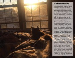 Norman and his story, featured in September, Pet Memorial Month.